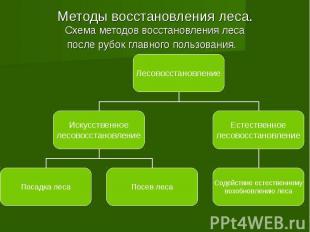 Методы восстановления леса. Схема методов восстановления леса после рубок главно