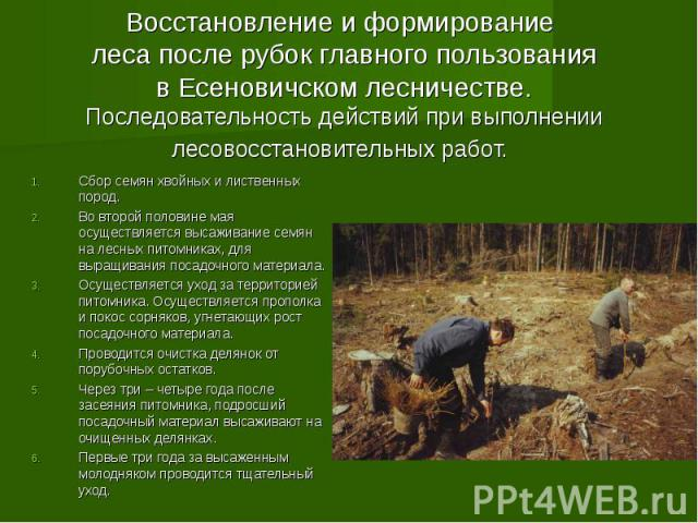 Восстановление и формирование леса после рубок главного пользования в Есеновичском лесничестве. Последовательность действий при выполнении лесовосстановительных работ. Сбор семян хвойных и лиственных пород. Во второй половине мая осуществляется выса…