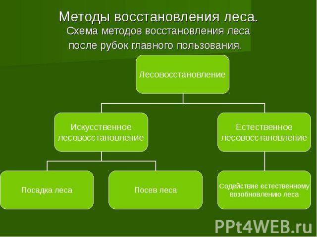 Методы восстановления леса. Схема методов восстановления леса после рубок главного пользования.
