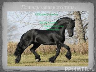 Лошадь западного типа.