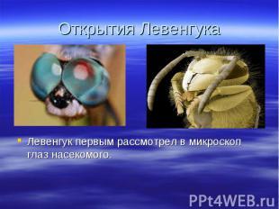 Левенгук первым рассмотрел в микроскоп глаз насекомого. Левенгук первым рассмотр