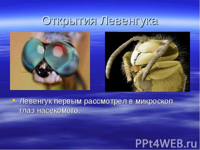 Левенгук первым рассмотрел в микроскоп глаз насекомого. Левенгук первым рассмотрел в микроскоп глаз насекомого.