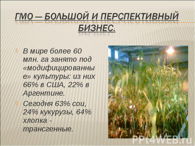 В мире более 60 млн. га занято под «модифицированные» культуры: из них 66% в США, 22% в Аргентине. В мире более 60 млн. га занято под «модифицированные» культуры: из них 66% в США, 22% в Аргентине. Сегодня 63% сои, 24% кукурузы, 64% хлопка - трансгенные.