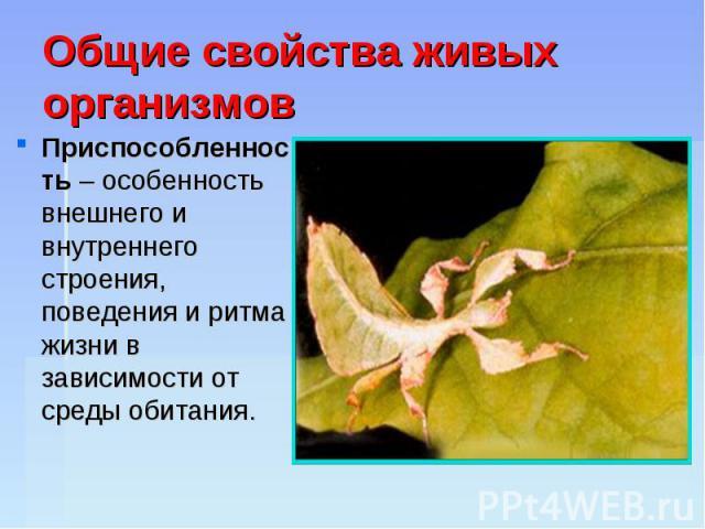 Общие свойства живых организмов Приспособленность – особенность внешнего и внутреннего строения, поведения и ритма жизни в зависимости от среды обитания.
