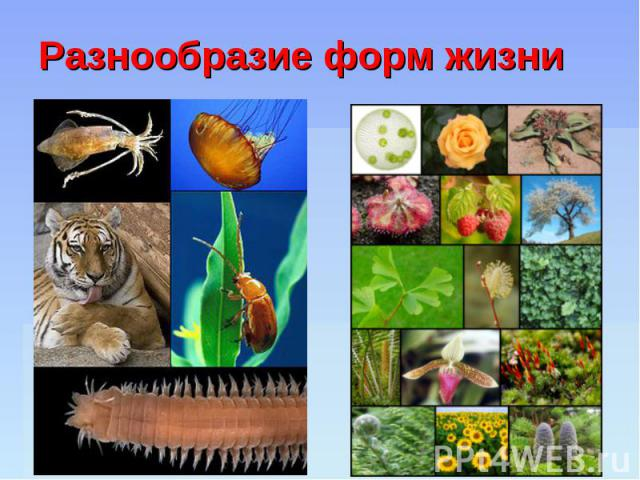 Разнообразие форм жизни