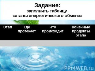Задание: заполнить таблицу «этапы энергетического обмена»