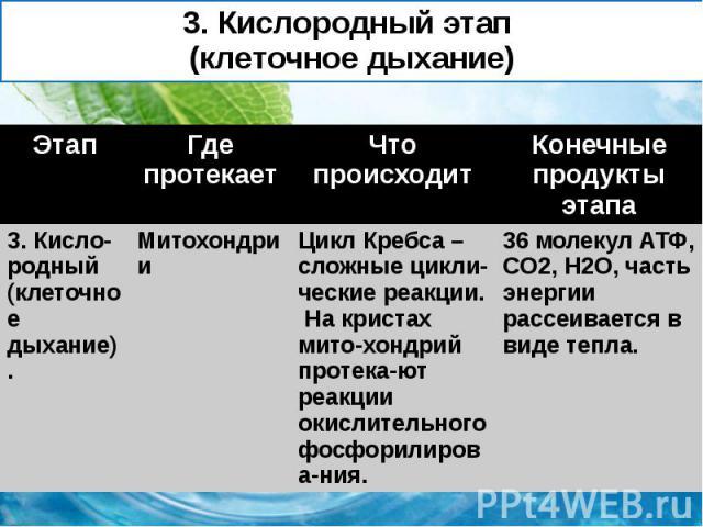 3. Кислородный этап (клеточное дыхание)