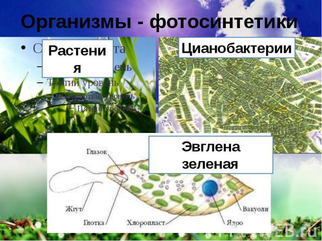 Организмы - фотосинтетики