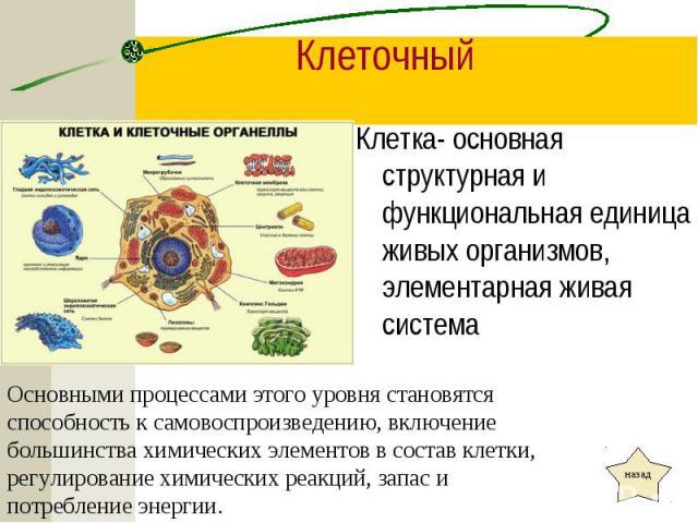 Клетка- основная структурная и функциональная единица живых организмов, элементарная живая система Клетка- основная структурная и функциональная единица живых организмов, элементарная живая система