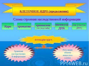 Схема строения наследственной информации Схема строения наследственной информаци