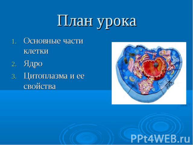 Основные части клетки Основные части клетки Ядро Цитоплазма и ее свойства