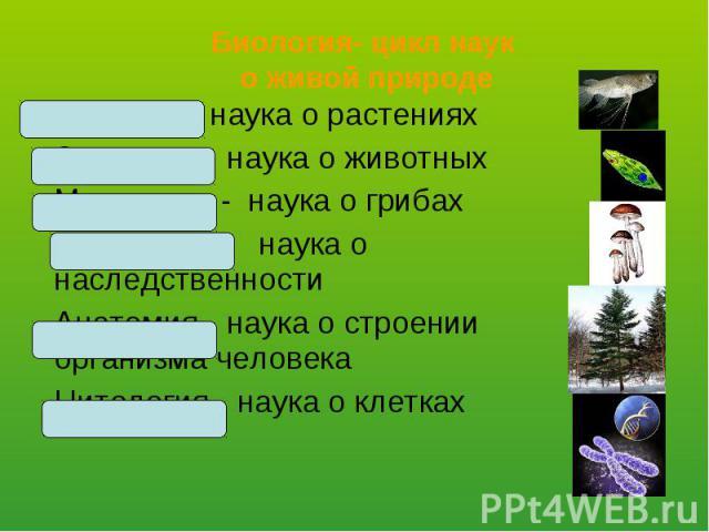 Ботаника- наука о растениях Ботаника- наука о растениях Зоология- наука о животных Микология - наука о грибах Генетика- наука о наследственности Анатомия- наука о строении организма человека Цитология- наука о клетках