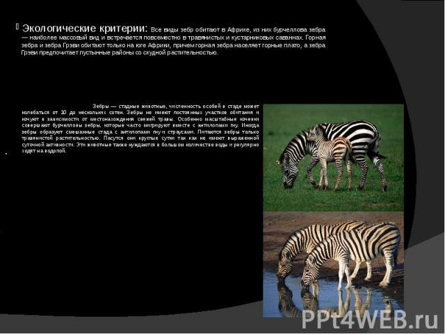 Экологические критерии: Все виды зебр обитают в Африке, из них бурчеллова зебра — наиболее массовый вид и встречается повсеместно в травянистых и кустарниковых саваннах. Горная зебра и зебра Грэви обитают только на юге Африки, причем горная зебра на…