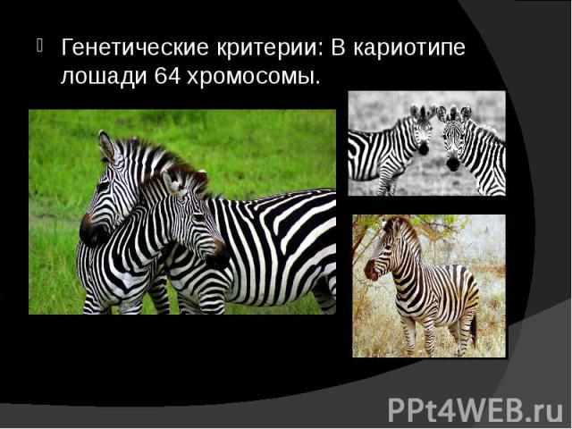 Генетические критерии: В кариотипе лошади 64 хромосомы. Генетические критерии: В кариотипе лошади 64 хромосомы.