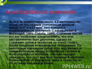 Australopithecus anamensis Вслед за ардипитеком около 4,2 миллиона лет назад (по