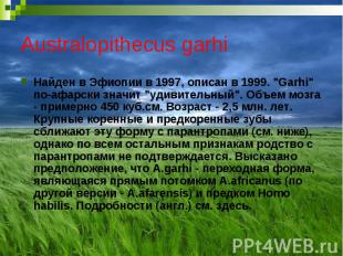 """Australopithecus garhi Найден в Эфиопии в 1997, описан в 1999. """"Garhi"""""""