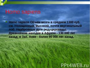 Homo sapiens Homo sapiens Объем мозга в среднем 1300 куб. см. Уплощенный, высоки