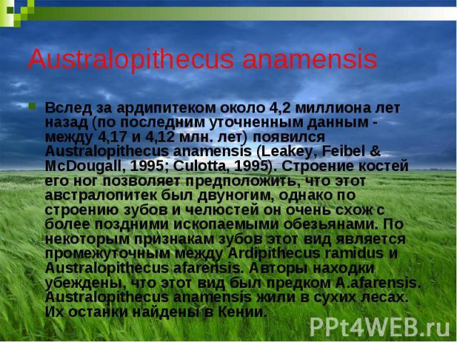 Australopithecus anamensis Вслед за ардипитеком около 4,2 миллиона лет назад (по последним уточненным данным - между 4,17 и 4,12 млн. лет) появился Australopithecus anamensis (Leakey, Feibel & McDougall, 1995; Culotta, 1995). Строение костей его…