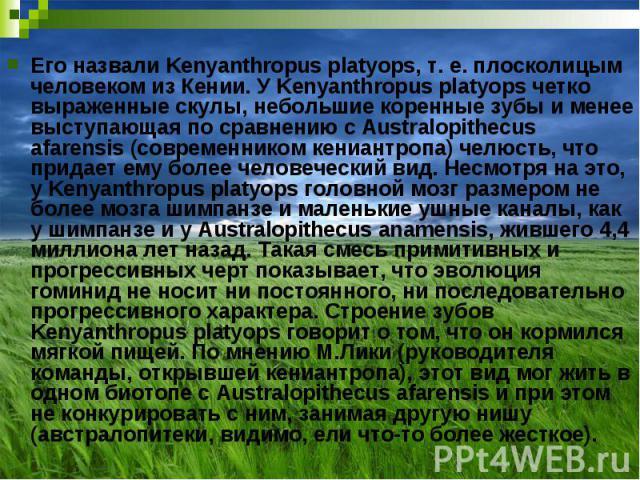 Его назвали Kenyanthropus platyops, т. е. плосколицым человеком из Кении. У Kenyanthropus platyops четко выраженные скулы, небольшие коренные зубы и менее выступающая по сравнению с Australopithecus afarensis (современником кениантропа) челюсть, что…
