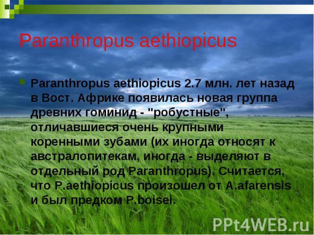 """Paranthropus aethiopicus Paranthropus aethiopicus 2.7 млн. лет назад в Вост. Африке появилась новая группа древних гоминид - """"робустные"""", отличавшиеся очень крупными коренными зубами (их иногда относят к австралопитекам, иногда - выделяют …"""