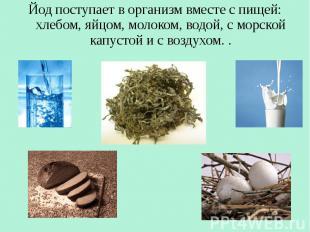 Йод поступает в организм вместе с пищей: хлебом, яйцом, молоком, водой, с морско