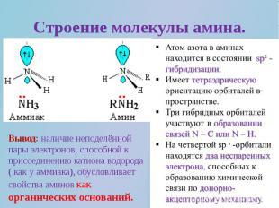 Строение молекулы амина.