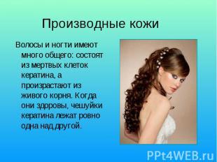 Производные кожи Волосы и ногти имеют много общего: состоят из мертвых клеток ке