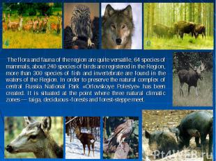 The flora and fauna of the region are quite versatile, 64 species of mammals, ab