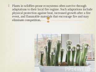 Plants in wildfire-prone ecosystems often survive through adaptations to their l