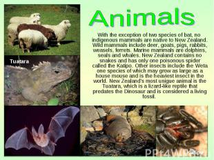 With the exception of two species of bat, no indigenous mammals are native to Ne