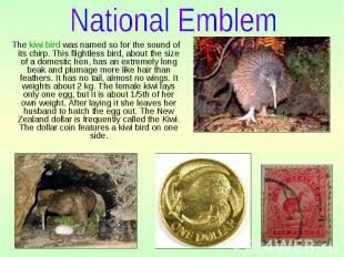 The kiwi bird was named so for the sound of its chirp. This flightless bird, abo