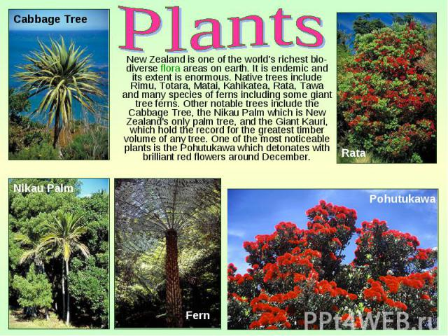New Zealand is one of the world's richest bio-diverse flora areas on earth. It is endemic and its extent is enormous. Native trees include Rimu, Totara, Matai, Kahikatea, Rata, Tawa and many species of ferns including some giant tree ferns. Other no…