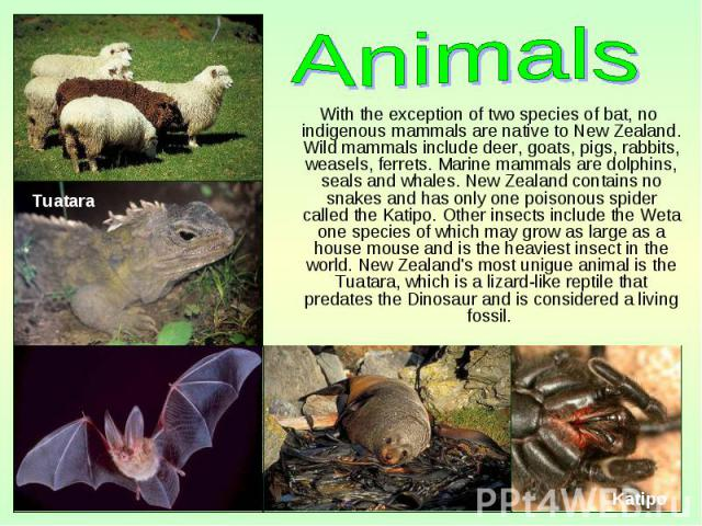 With the exception of two species of bat, no indigenous mammals are native to New Zealand. Wild mammals include deer, goats, pigs, rabbits, weasels, ferrets. Marine mammals are dolphins, seals and whales. New Zealand contains no snakes and has only …