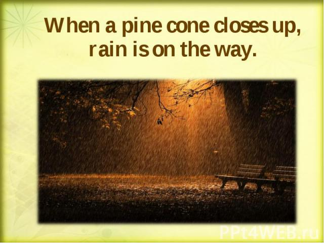 When a pine cone closes up, rain is on the way. When a pine cone closes up, rain is on the way.