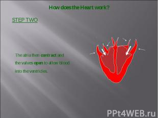 how the heart works - 800×600