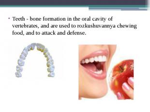 Teeth - bone formation in the oral cavity of vertebrates, and are used to rozkus