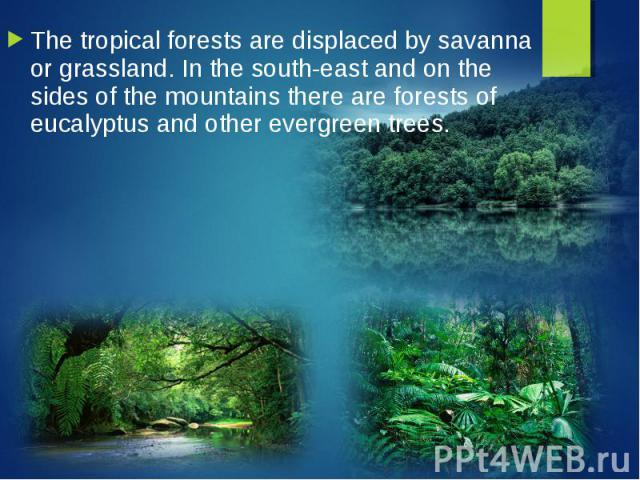 The tropical forests are displaced by savanna or grassland. In the south-east and on the sides of the mountains there are forests of eucalyptus and other evergreen trees. The tropical forests are displaced by savanna or grassland. In the south-east …