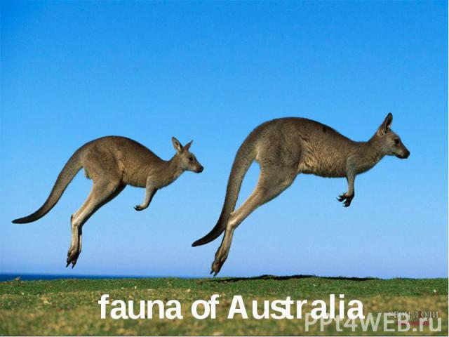 fauna of Australia