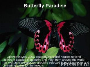 Butterfly Paradise Opened in May 2006, Butterfly Paradise houses several differe
