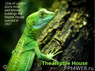 The Reptile House One of London Zoo's most well-known buildings the Reptile Hous