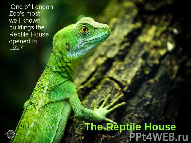 The Reptile House One of London Zoo's most well-known buildings the Reptile House opened in 1927.