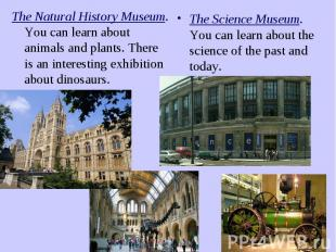 The Natural History Museum. You can learn about animals and plants. There is an