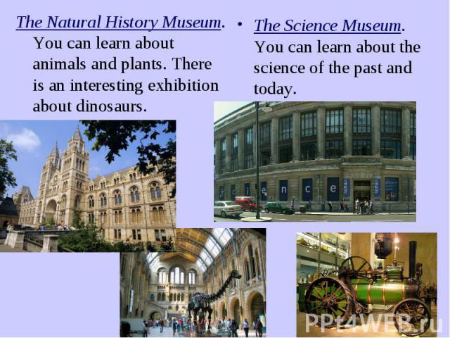The Natural History Museum. You can learn about animals and plants. There is an interesting exhibition about dinosaurs.