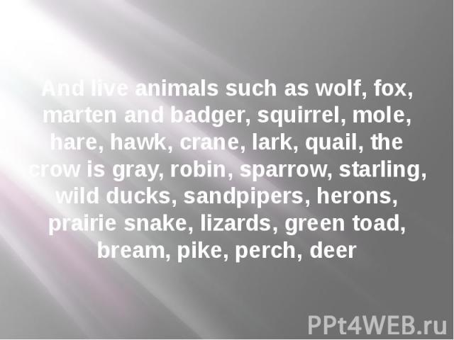 And live animals such as wolf, fox, marten and badger, squirrel, mole, hare, hawk, crane, lark, quail, the crow is gray, robin, sparrow, starling, wild ducks, sandpipers, herons, prairie snake, lizards, green toad, bream, pike, perch, deer
