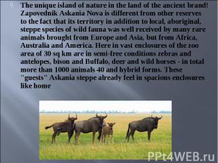 The unique island of nature in the land of the ancient brand! Zapovednik Askania