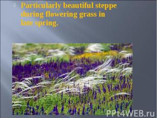 Particularly beautiful steppe during flowering grass in late spring. Particularl