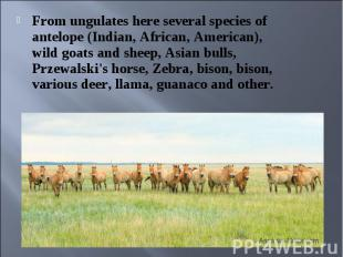 From ungulates here several species of antelope (Indian, African, American), wil