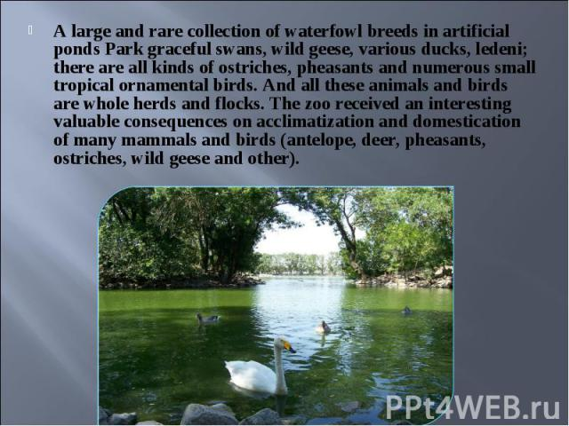 A large and rare collection of waterfowl breeds in artificial ponds Park graceful swans, wild geese, various ducks, ledeni; there are all kinds of ostriches, pheasants and numerous small tropical ornamental birds. And all these animals and birds are…