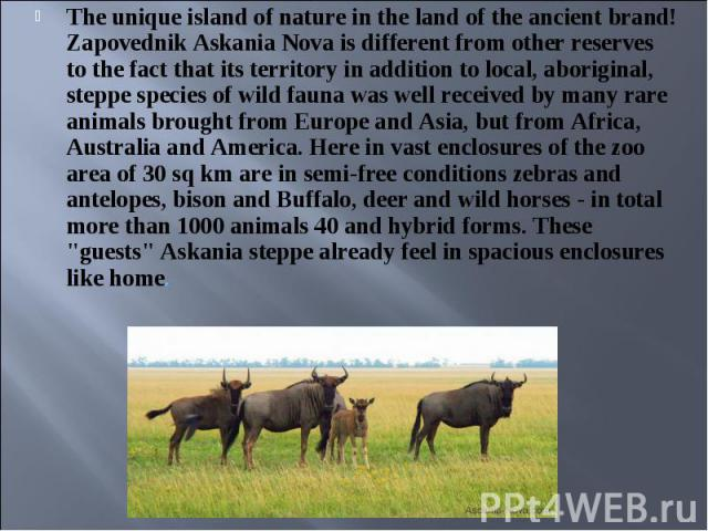 The unique island of nature in the land of the ancient brand! Zapovednik Askania Nova is different from other reserves to the fact that its territory in addition to local, aboriginal, steppe species of wild fauna was well received by many rare anima…
