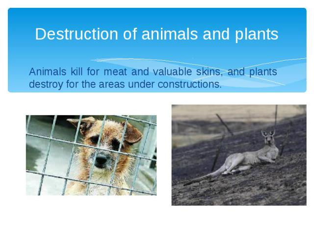 Destruction of animals and plants Animals kill for meat and valuable skins, and plants destroy for the areas under constructions.
